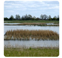 reed-beds