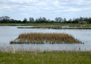 Habitat Creation - Reedbeds